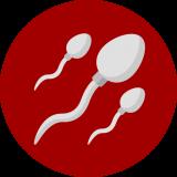Benessere Urinario - Spermatozoi